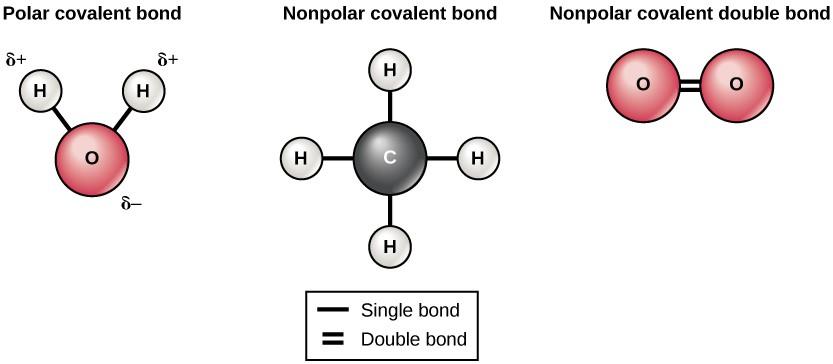 Diagram depicting polar and nonpolar covalent bonds