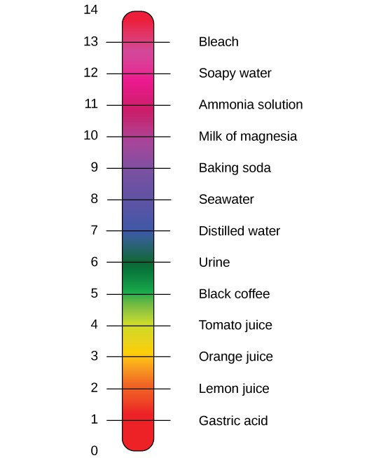 The pH scale with representative substances and their pHs.
