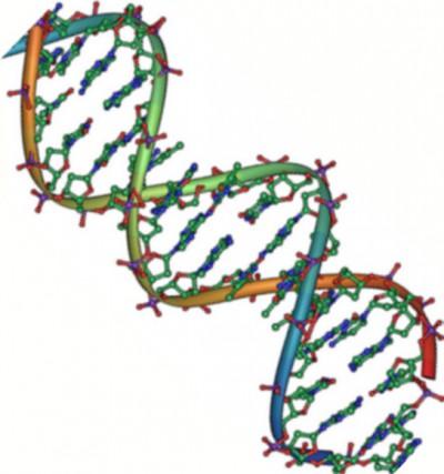 Double helix of DNA.