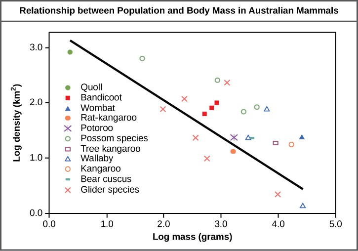 Graph plots log density in kilometers squared versus log body mass in grams. The values are inversely proportional, so that density decreases linearly with increasing body mass.