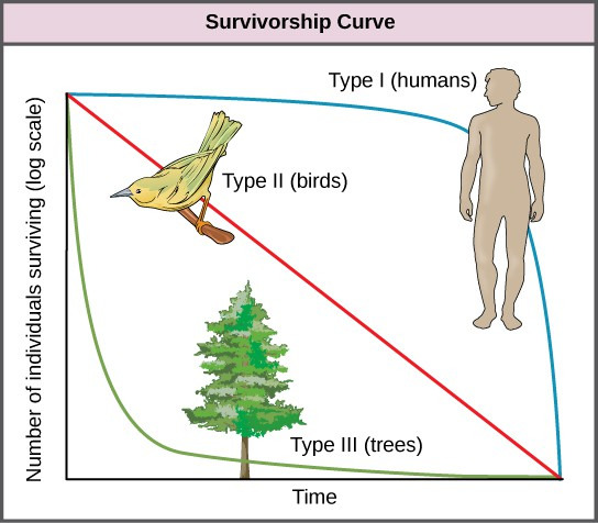 Graph plots the log of number of individuals surviving versus time. Three curves are shown, representing type I, type II, and type III survivorship patterns. Birds exhibit a type II survivorship curve, which decreases linearly with time. Humans show a type I survivorship curve, which starts with a gentle slope that becomes increasingly steep with time. Trees show a type III survivorship pattern, which starts with a steep slope that becomes less steep with time.