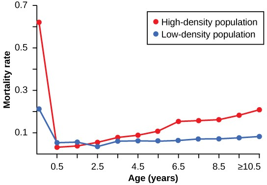 Graph with mortality rate from 0 to 0.7 on the Y axis and age in years from 0 to greater than or equal to 10.5 on the X axis. The mortality rate for the high-density population starts at about 0.6 at age 0 (near birth) then drops dramatically to about 0.03 at six months old, then climbs in a nearly straight line to reach about 0.2 at the age of 10.5 years. The mortality rate for the low-density population starts at about 0.2 at age 0 (near birth) then drops to about 0.06 at six months old, then gradually climbs only a small amount to reach about 0.1 at the age of 10.5 years.