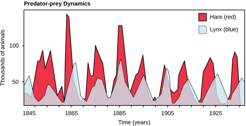 Graph plots number of animals in thousands versus time in years. The number of hares fluctuates between 10,000 at the low points and 75,000 to 150,000 at the high points. There are typically fewer lynxes than hares, but the trend in number of lynxes follows that of number of hares.