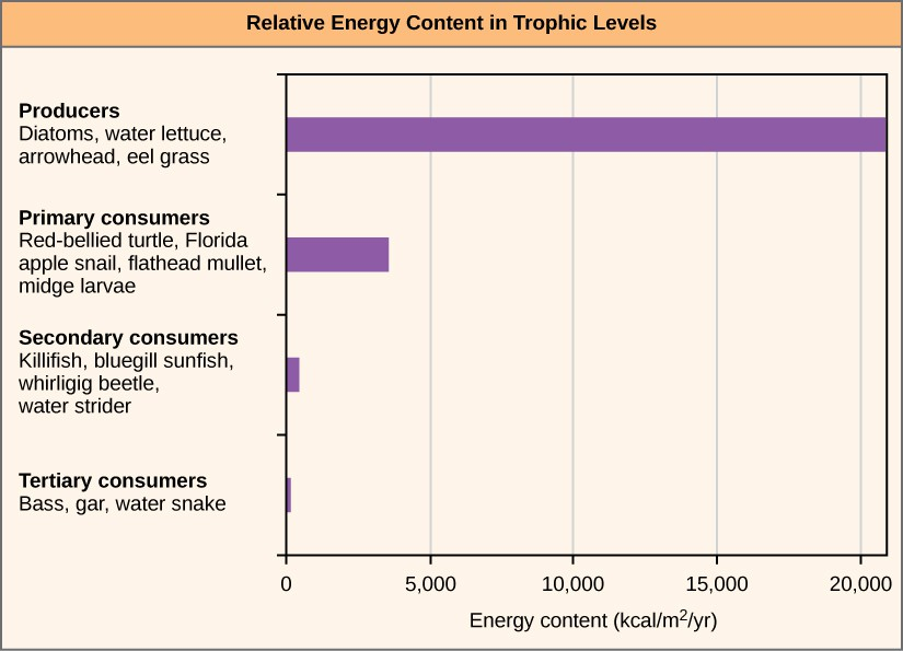 Graph shows energy content in different trophic levels. The energy content of producers is over 20,000 kilocalories per meter squared per year. The energy content of primary consumers is much smaller, about 4,000 kcal/m 2/year. The energy content of secondary consumers is 100 kcal/m2/year, and the energy content of tertiary consumers is only 1 kcal/m2/year