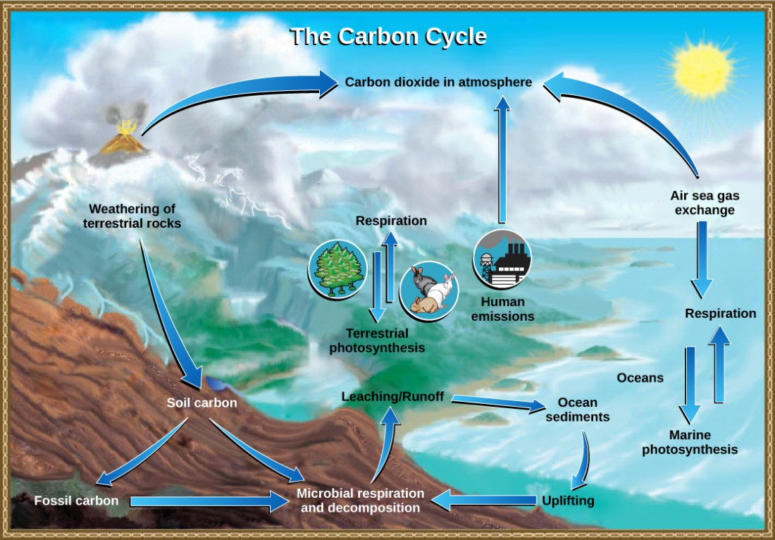 The illustration shows the carbon cycle. Carbon enters the atmosphere as carbon dioxide gas released from human emissions, respiration and decomposition, and volcanic emissions. Carbon dioxide is removed from the atmosphere by marine and terrestrial photosynthesis. Carbon from the weathering of rocks becomes soil carbon, which over time can become fossil carbon. Carbon enters the ocean from land via leaching and runoff. Uplifting of ocean sediments can return carbon to land.