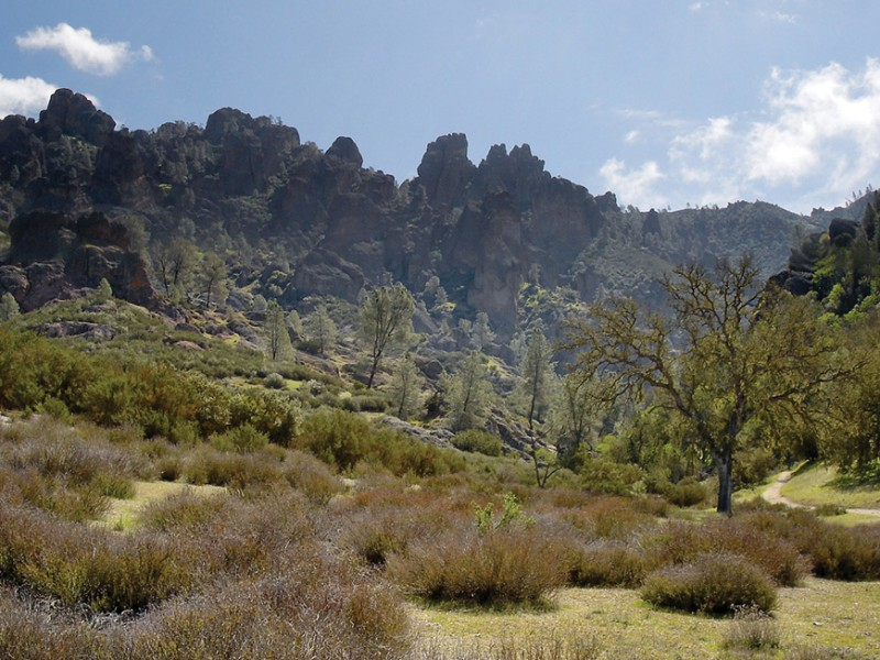 Photo depicts a landscape with many shrubs, dormant grass, a few trees, and mountains in the background.
