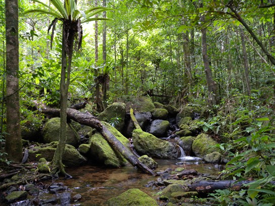 This photo shows a lush green landscape with diverse tropical trees, ferns, and mosses growing next to a small stream.