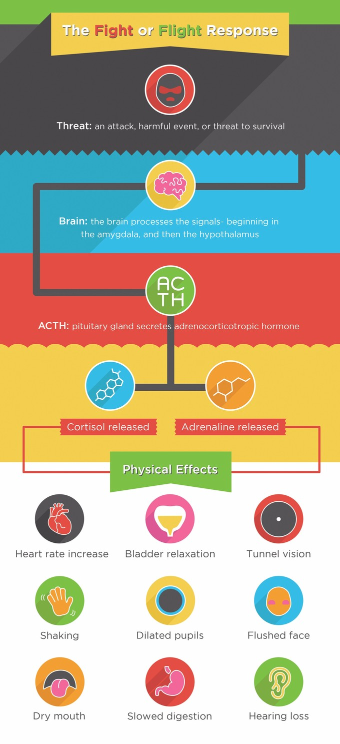 Stress Boundless Anatomy And Physiology