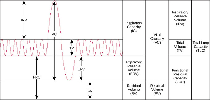 39 2c Lung Volumes And Capacities Biology Libretexts