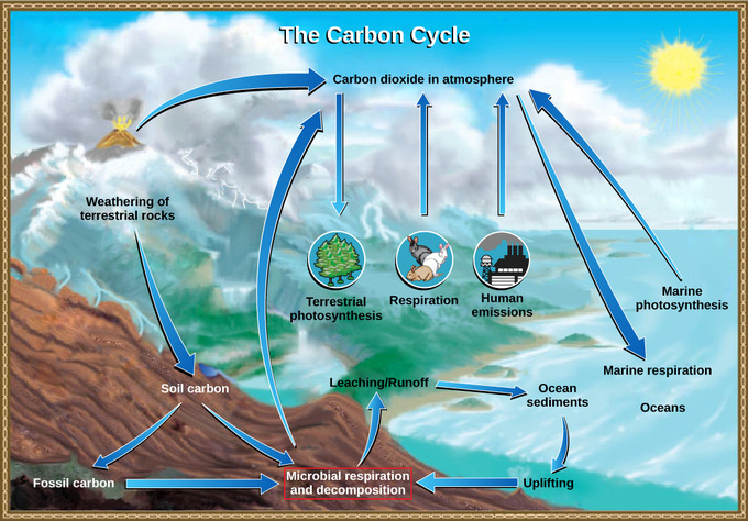 cycles in biology Cycles in biology a cycle is an interval during which a recurring sequence of events occurs cycles are a hugely relevant component of biology.