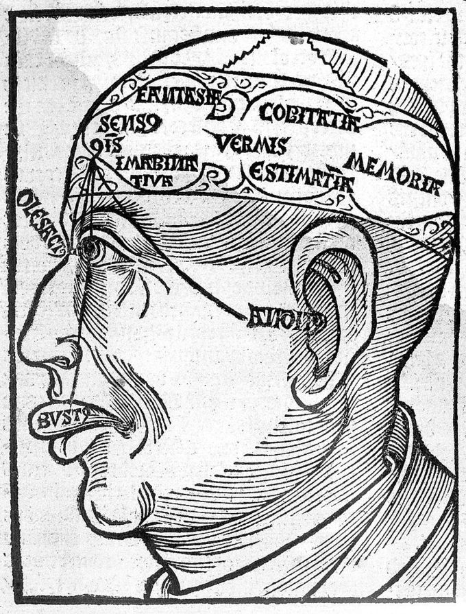 A drawing of a man's head that shows all of the senses - sight, hearing, smell, and taste.