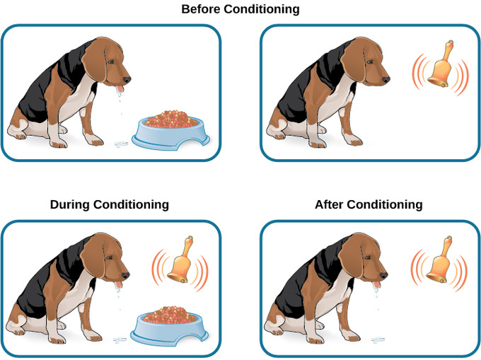 Classical Conditioning Dog Barking