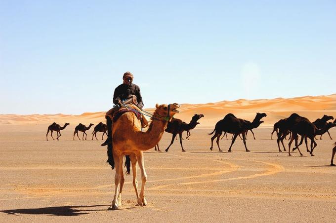 القبائل العربية في الجاهلية